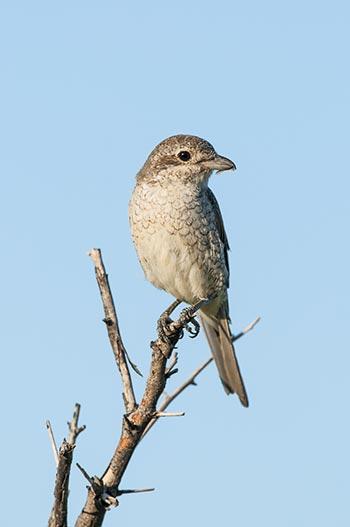Nambiti-Birding-01