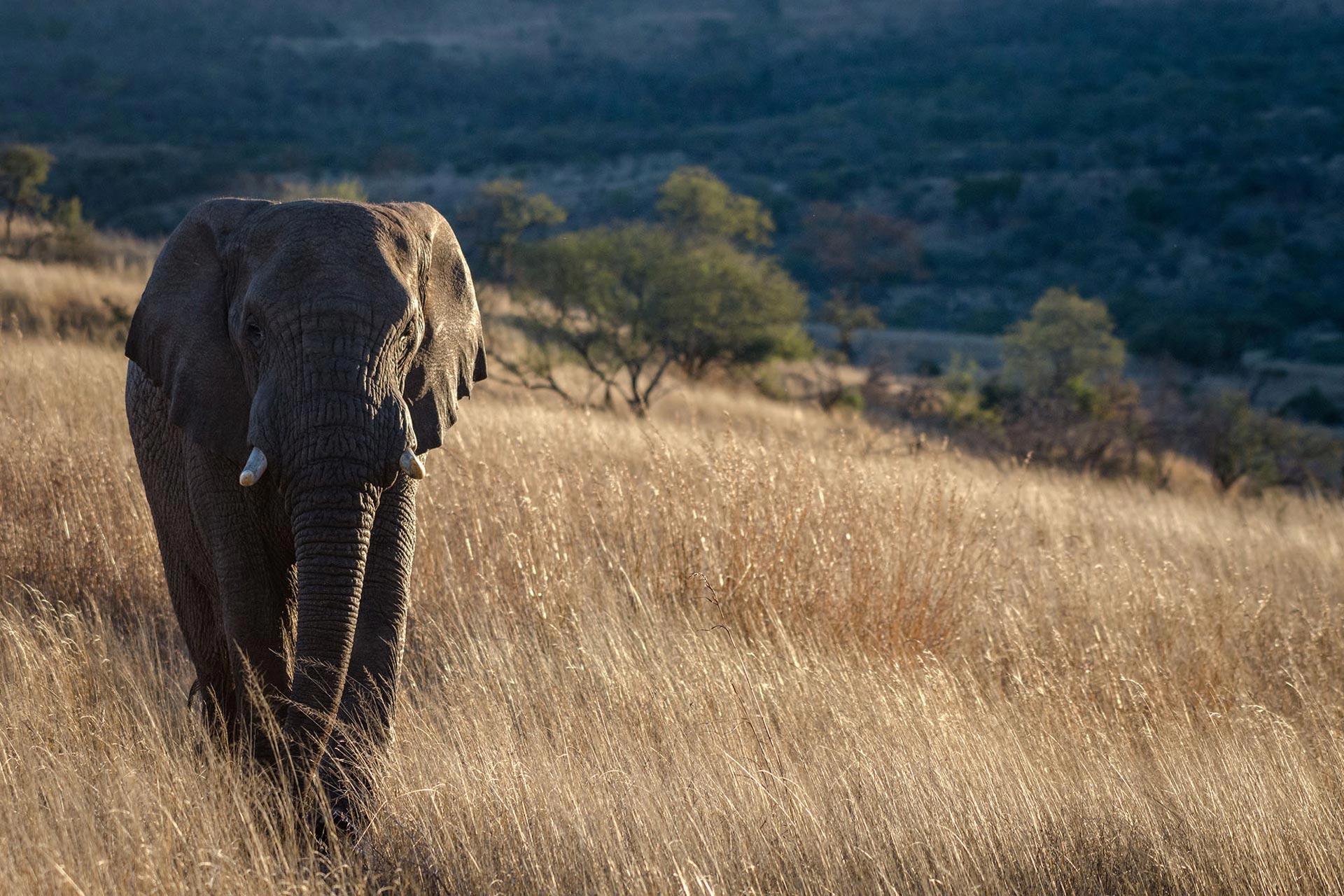 Nambiti Big 5 Private Game Reserve in KwaZulu Natal, South ...